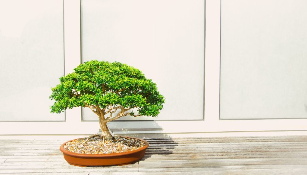 How To Make Bonsai Trees A Complete Guide About Making Bonsai Trees Spiritual Hearts